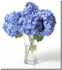 hydrangeas-where-to-plant